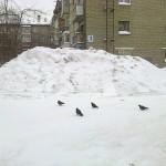zima15-9